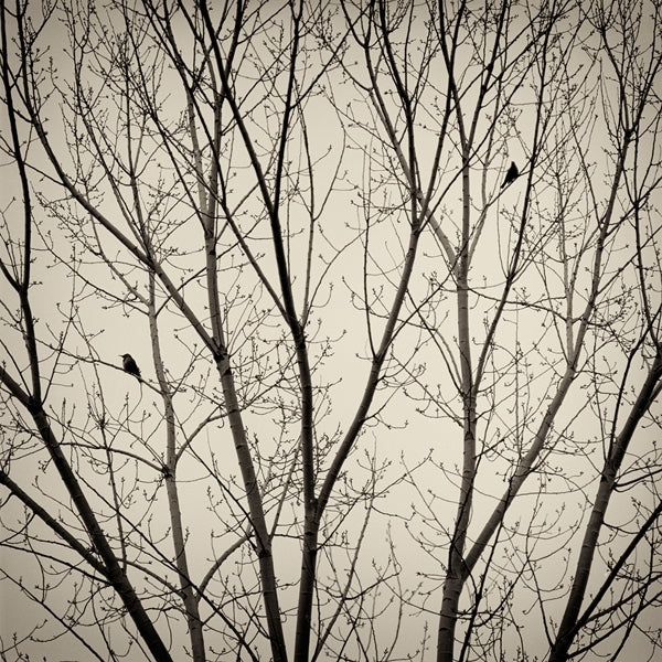 Two Birds by Kerik Kouklis-Ansel Adams Gallery