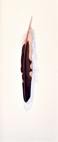 Red-Shafted Flicker Feather