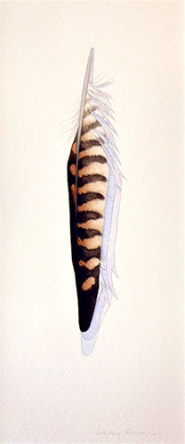 American Kestrel Feather
