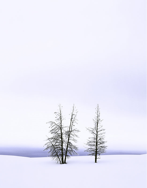 Frosty Pines, Yellowstone