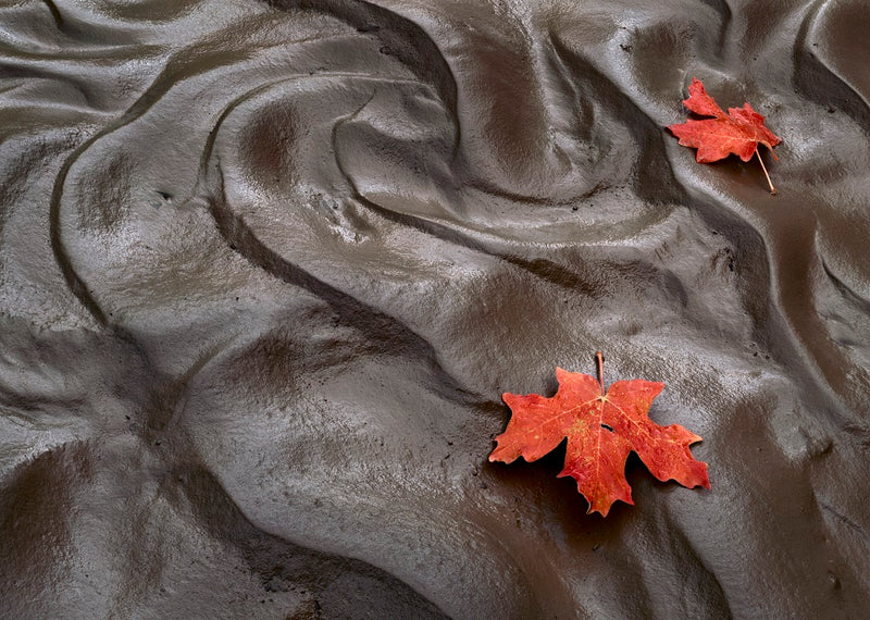 Maple Leaves, Mud, Clear Creek, Zion
