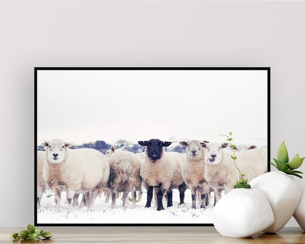 the black sheep Best Sellers, Black Sheep Print, Farmland Print, Landscape Photography Print (Unframed)