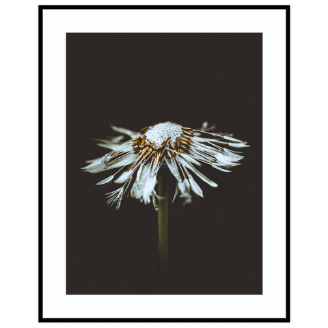 blunted arrows Abstract Nature Print, Dandelion Print, Floral Print, Floral Prints, F Print (Unframed)