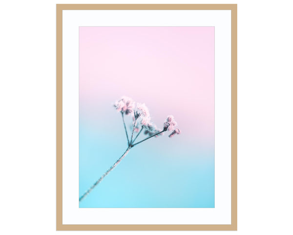 blush Floral Print, Floral Prints, Flower Photography, Flower Print, Macro P Print (Unframed)