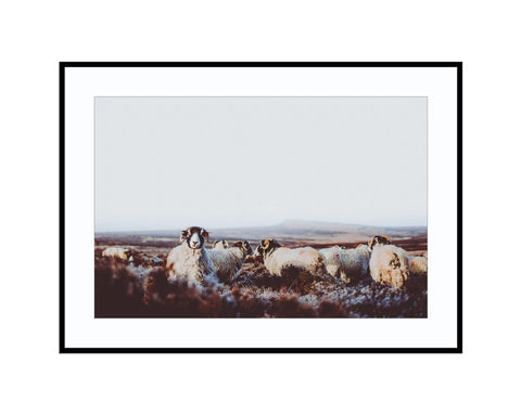 Flock of Sheep at Stanage EdgePhotograph Print Landscape Photography Wall Art by Danscape