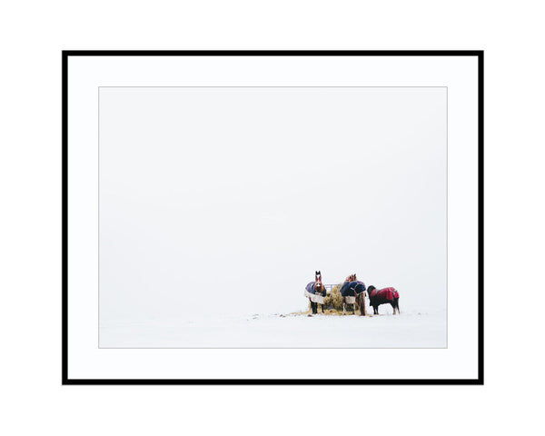Horses in SnowPhotograph Print Landscape Photography Wall Art by Danscape