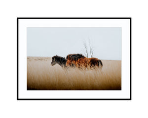 Moving OnPhotograph Print Landscape Photography Wall Art by Danscape