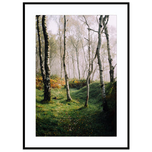 path of dancing trees Autumn Print, Birch Tree Print, Bole Hill Quarry Print, Derbyshire Pri Print (Unframed)