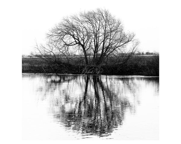 reflections Black and White Tree Print, Fine Art Landscape Prints, Fiskerton Print Print (Unframed)