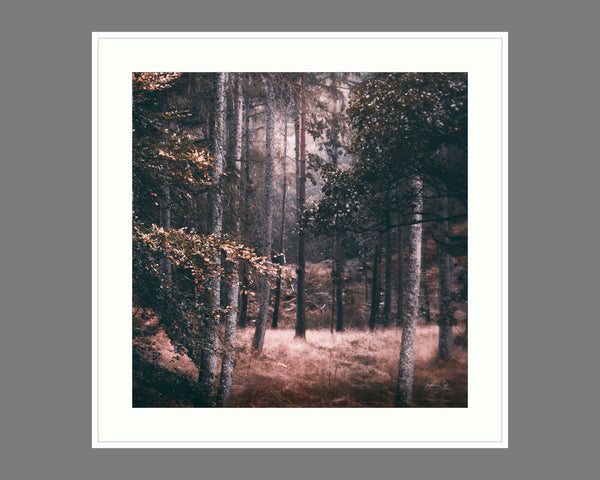 reverie Autumn Print, Framed Wall Art, Lake District, Lake District Canvas, La Print (Unframed)
