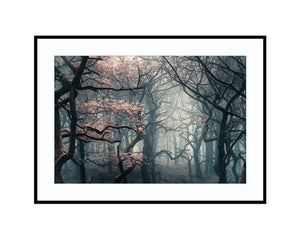 Shadow WoodsPhotograph Print Landscape Photography Wall Art by Danscape