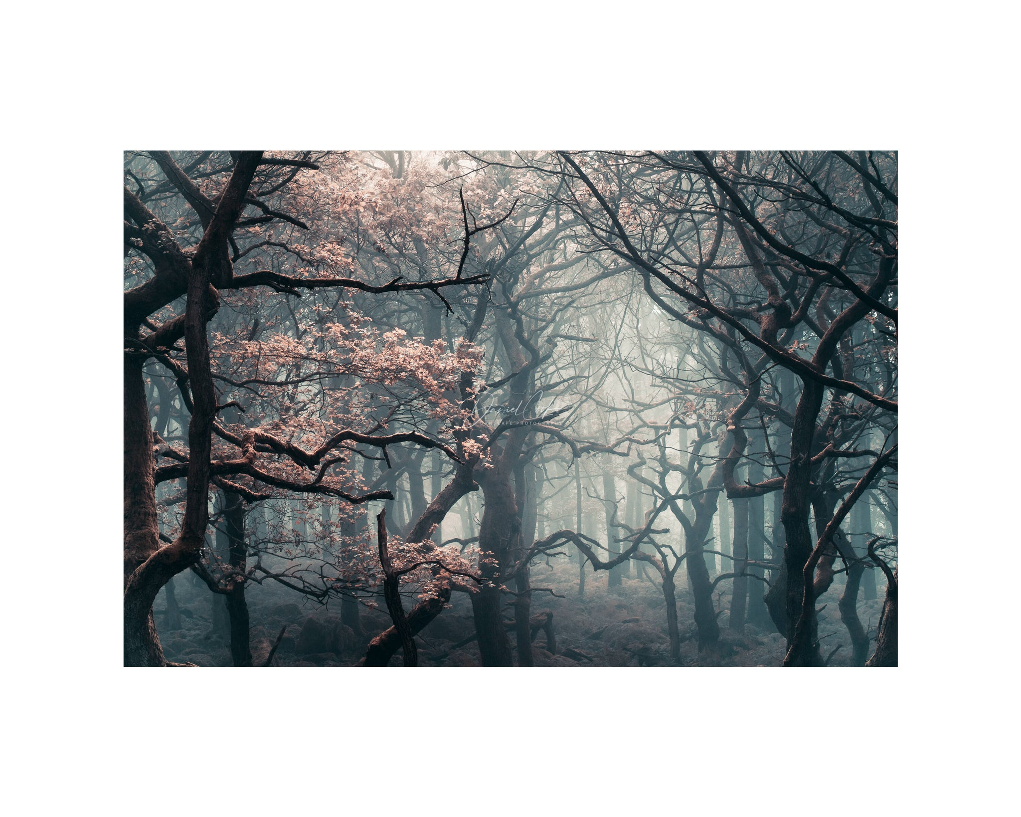 shadow woods Autumn Print, Best Sellers, Bole Hill Quarry Print, Derbyshire Print,  Print (Unframed)