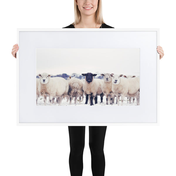 the black sheep Best Sellers, Black Sheep Print, Farmland Print, Landscape Photography Canvas Print - Ready To Hang on Wall