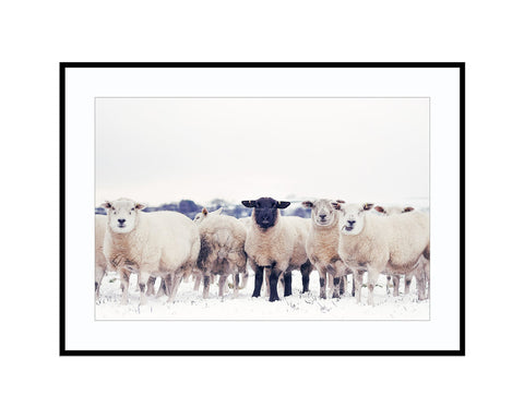 The Black SheepPhotograph Print Landscape Photography Wall Art by Danscape
