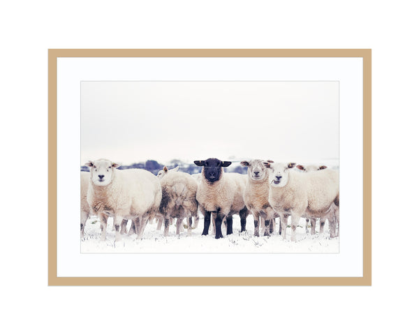 the black sheep Best Sellers, Black Sheep Print, Farmland Print, Landscape Photography Framed - Ready To Hang