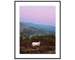 The Sheep and The MoonPhotograph Print Landscape Photography Wall Art by Danscape
