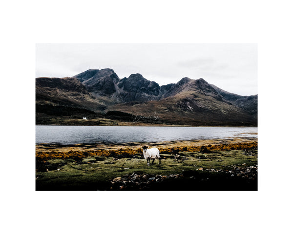 the sheep and mountain Best Sellers, Elgol Prints, Highlands Gift, Isle of Skye Prints, Lands Print (Unframed)