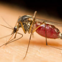 Avoid Being A Mosquito Attractant, Tips on How to Prevent Against Being Bitten
