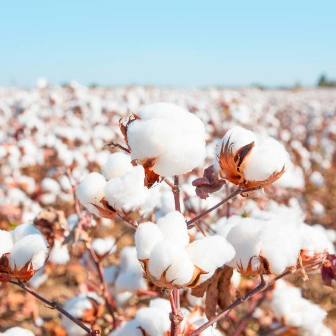 Five Facts About Cotton That You May Do Not Know