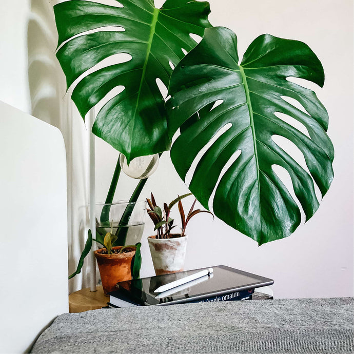 Best Plants For The Bedroom