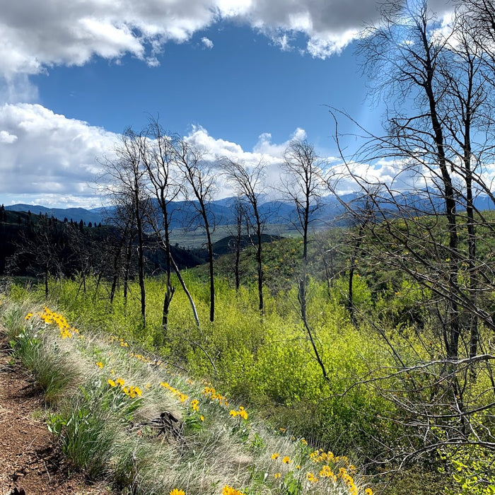 Homeschooling in the Methow Valley - Week Seven