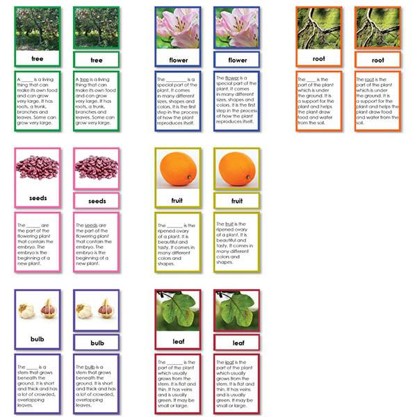 Botany-Parts Of Sets - Botany Collection Of 7 Sets, 3-Part Cards With Definitions
