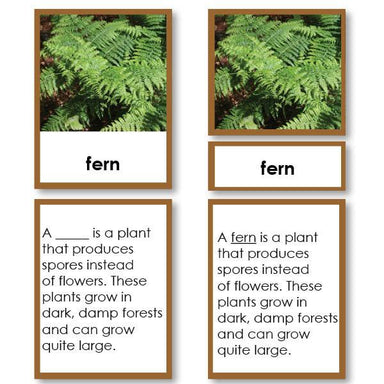 Botany-Parts Of Sets - Parts Of A Fern 3-Part Cards With Definitions