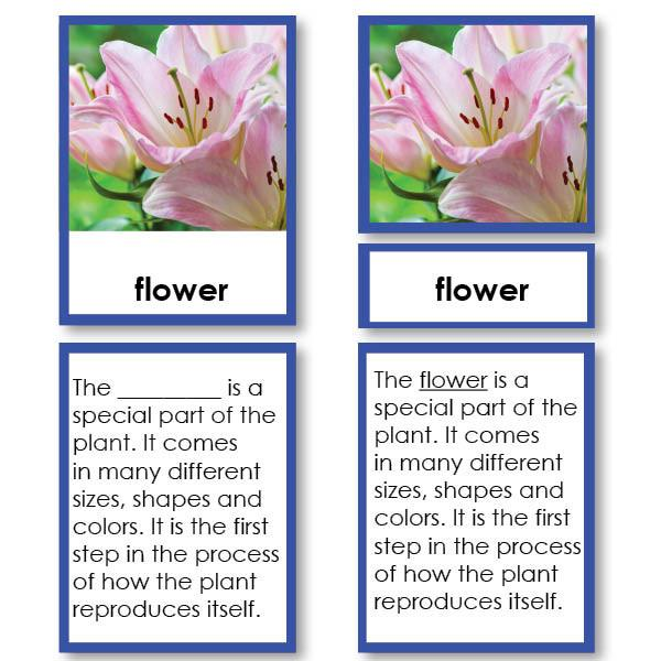 Botany-Parts Of Sets - Parts Of A Flower 3-Part Cards With Definitions