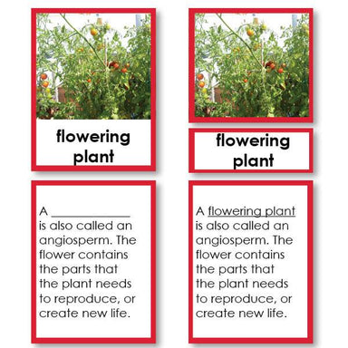 Botany-Parts Of Sets - Parts Of A Flowering Tomato Plant 3-Part Cards With Definitions
