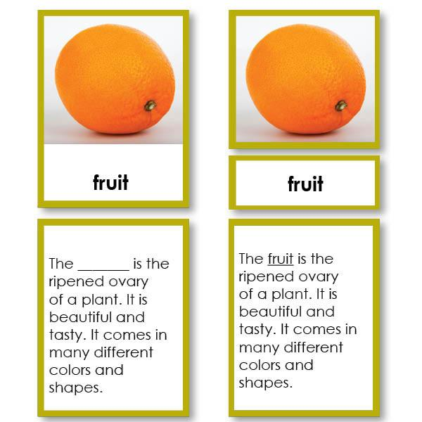 Botany-Parts Of Sets - Parts Of A Fruit 3-Part Cards With Definitions