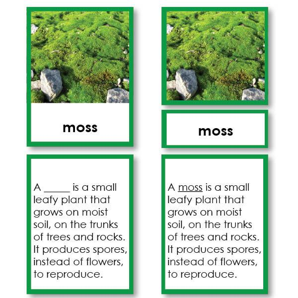 Botany-Parts Of Sets - Parts Of A Moss 3-Part Cards With Definitions
