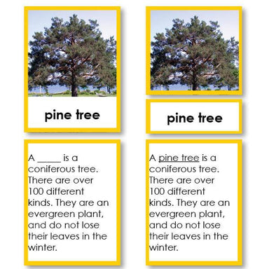 Botany-Parts Of Sets - Parts Of A Pine Tree 3-Part Cards With Definitions