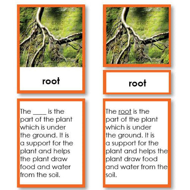 Botany-Parts Of Sets - Parts Of A Root Tree 3-Part Cards With Definitions