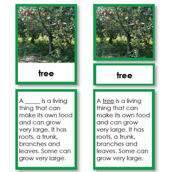Botany-Parts Of Sets - Parts Of A Tree 3-Part Cards With Definitions