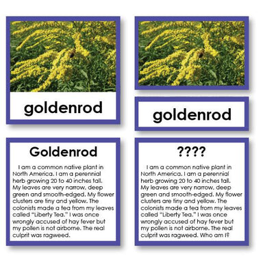 "Botany-Plant Identification - Botany ""Who Am I?"" 3-Part Cards - Wild Flower"