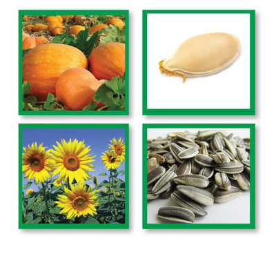 Botany-Sorting Sets - Seed Matching Cards