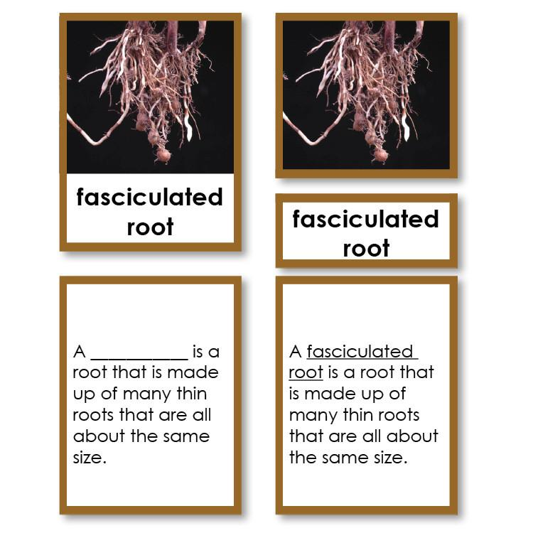 Botany-Types Of Sets - Types Of Roots 3-Part Cards With Definitions
