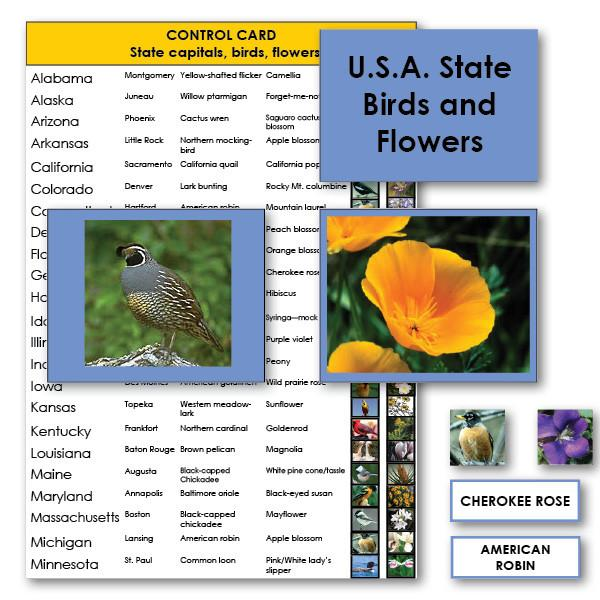 Geography Material-Study Of The United States - USA State Birds And Flowers With Photographs And Labels