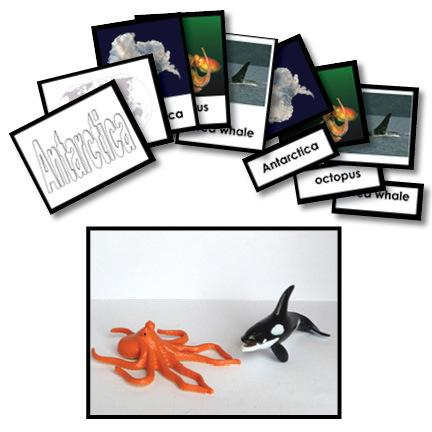 Geography Material-Study Of World Geography - Geography 3-Part Cards With Objects For Antarctica