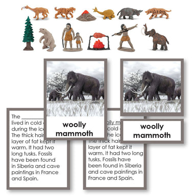 History Material-Prehistory - Prehistoric Life Historical Replica 3-Part Cards With Objects