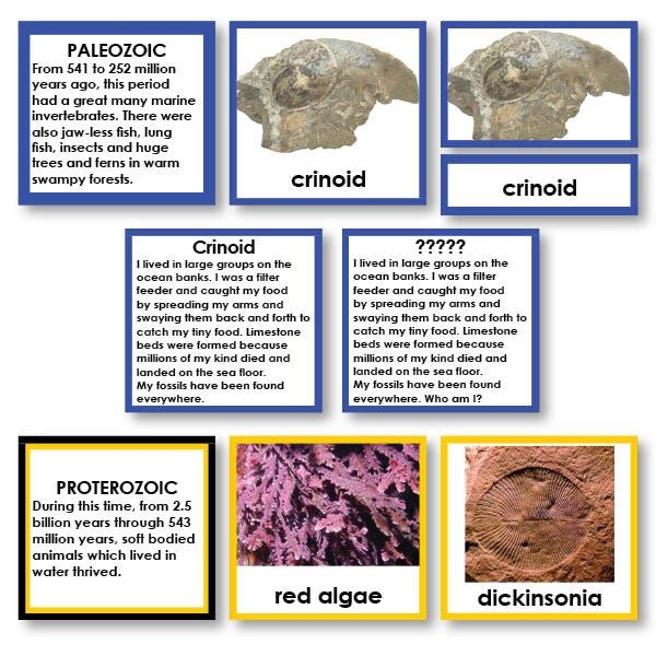 "History Material-Prehistory - Timeline Of Life ""Who Am I?"" 3-Part Cards With Descriptions"
