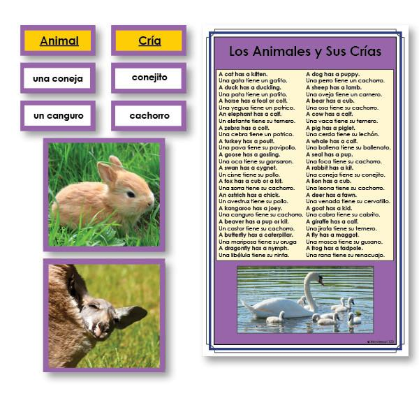 Language Arts-Spanish - Spanish Animals And Their Babies Vocabulary Sorting Cards With Photographs