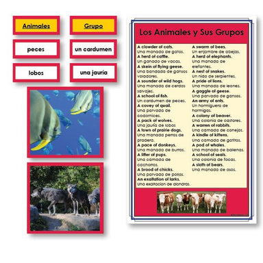Language Arts-Spanish - Spanish Animals And Their Groups Vocabulary Sorting Cards With Photographs
