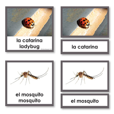 Language Arts-Spanish - Spanish Language Insects 3-Part Cards With Photographs