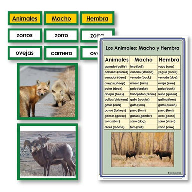 Language Arts-Spanish - Spanish Male And Female Animals Vocabulary Sorting Cards With Photographs