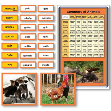 Language Arts-Spanish - Spanish Summary Of Animals Vocabulary Sorting Cards With Photographs