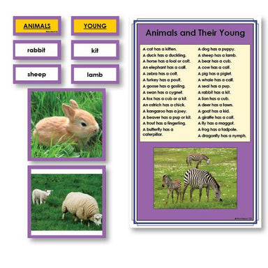 Language Arts-Vocabulary, Spelling & Editing - Animals And Their Babies Vocabulary Sorting Cards With Photographs