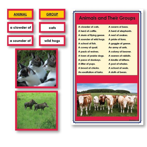 Language Arts-Vocabulary, Spelling & Editing - Animals And Their Groups Vocabulary Sorting Cards With Photographs