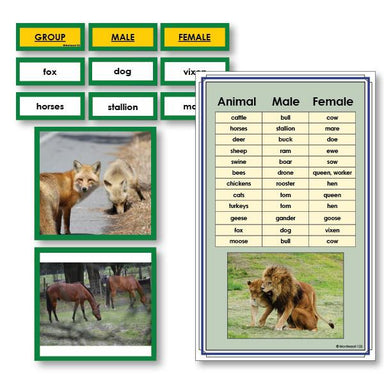 Language Arts-Vocabulary, Spelling & Editing - Male And Female Animals Vocabulary Sorting Cards With Photographs