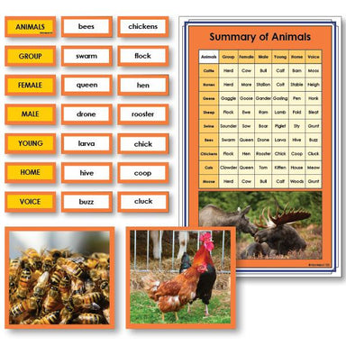 Language Arts-Vocabulary, Spelling & Editing - Summary Of Animals Vocabulary Sorting Cards With Photographs